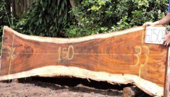 WALNUT PAROTA SLAB G1507
