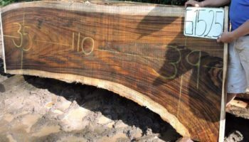 WALNUT PAROTA SLAB G1525